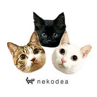 nekodea*宿と猫