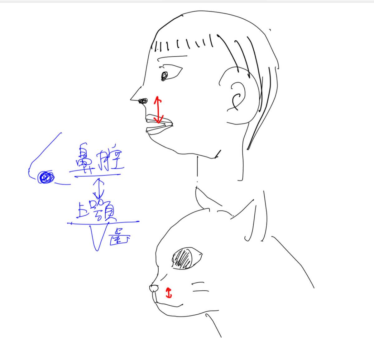 猫と歯科疾患~口の解剖~